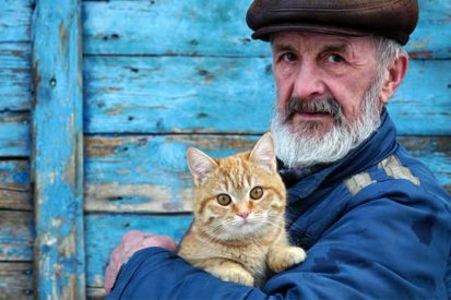 Why Cats Are Great For Seniors