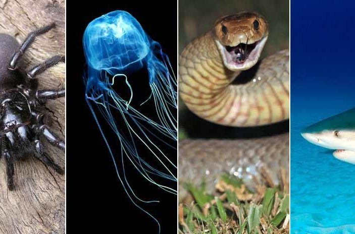 Deadly Animals to Avoid While in Australia