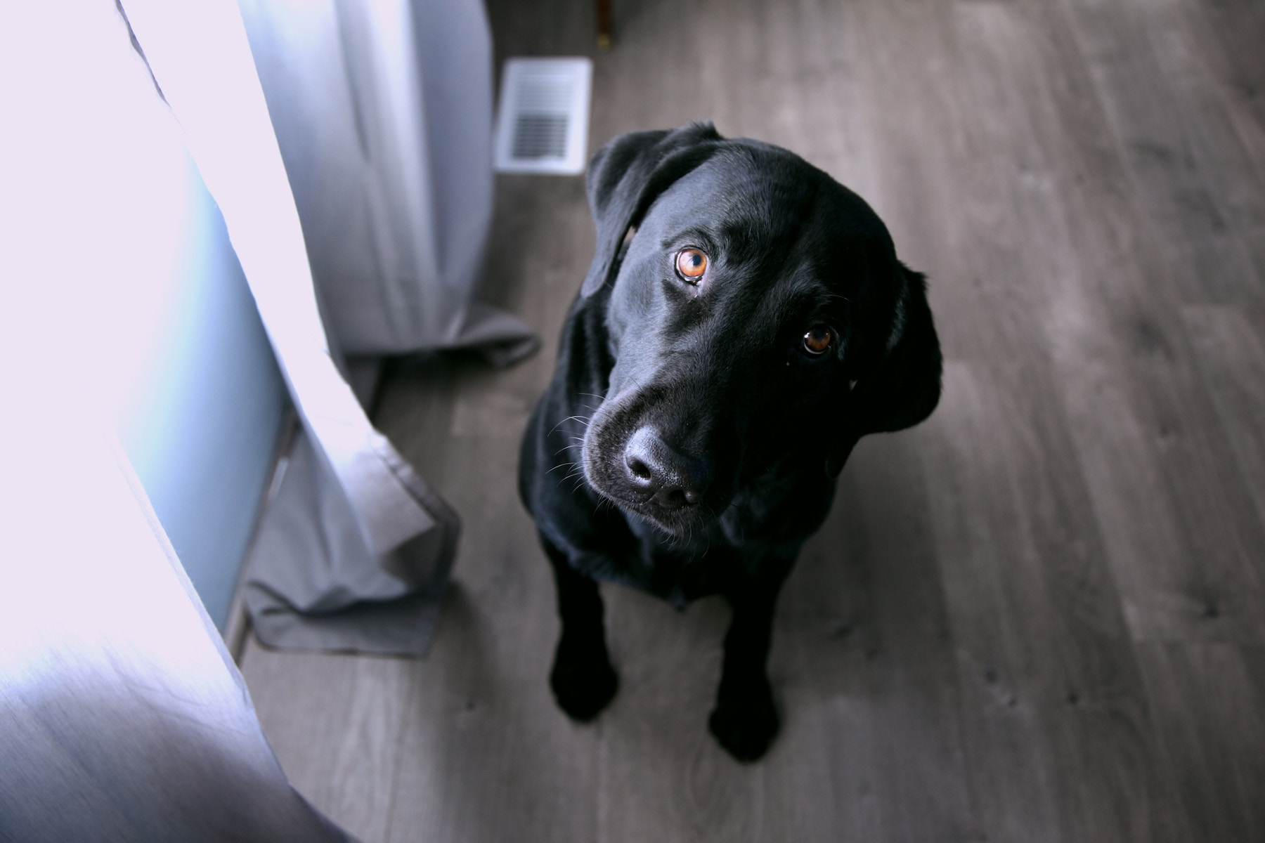 5 Tips for Keeping Your House Clean With Dogs